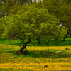 A Hidden Meadow Of Yellow