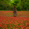 Palm Of Life In Red