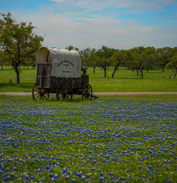 The Wagon Wheel In Blue Bonnets
