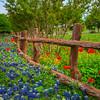 Garden Display of Texas Color
