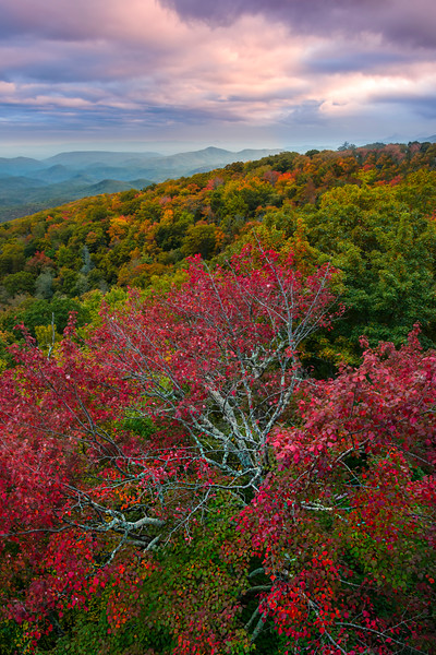 Below Bridge With Fan Red Tree From The Blue Ridge Parkway - Blue Ridge Parkway, North Carolina