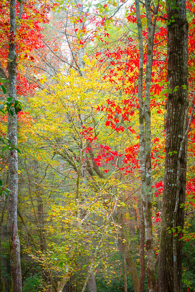Abstract Look At Fall Colors Within Pisgah Forest - Pisgah Forest, North Carolina