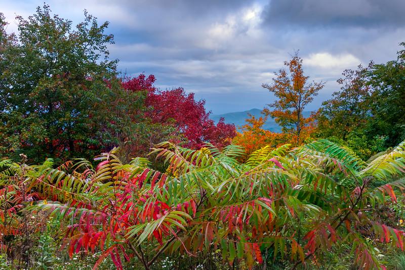 Patterns Of Hillside Colors Along The Blue Ridge Parkway - Blue Ridge Parkway, North Carolina