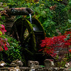 A Touch Of Fall In The Lookout Mountain Garden  - Lookout Mountain, Chattanooga, Tennessee