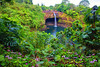Akaka Falls State Park - The Big Island, Hawaii