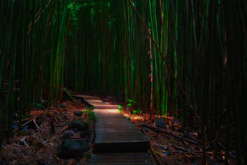 Bamboo Forest Boardwalk - , Pipiwai Trail, Haleakala National Park, Maui, Hawaii