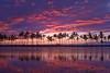 Every Color Imaginable - Ana Pond, Kona, The Big Island, Hawaii
