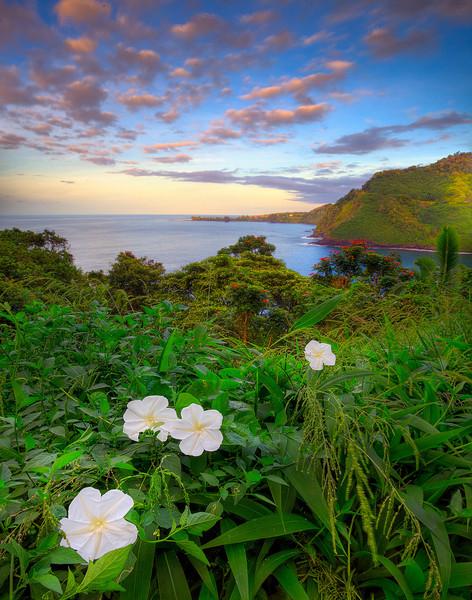 Colors Along The Hana Highway - Hana Highway, Maui, Hawaii