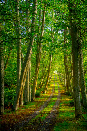 A Lane Of Spring Colors