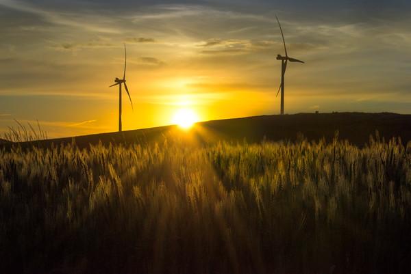 Harvest Season And Sun Setting -The Palouse, Eastern Washington