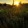 Silver Forest Trail Sunburst - Silver Forest Trail, Mt Rainier NP, WA