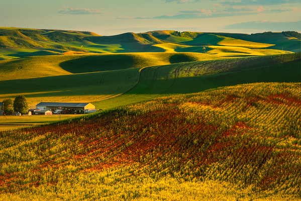 Red Gold Dust Leading Into Hills - Druffel Road, Coltan, Palouse, WA