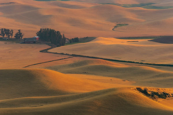 Mounds Of Golden Colors - Steptoe Butte State Park, Palouse, Eastern Washington