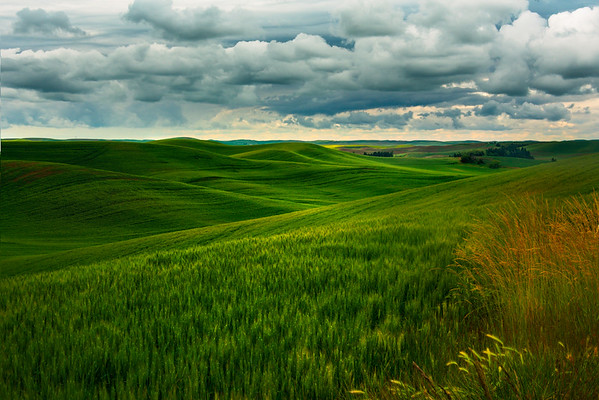 Valley Of Lime Green Delight - Old Moscow/Pullman Road, Palouse, WA