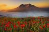 Fire Sunset In Meadow Of Mt St Helens - Johnson Ridge Observatory, Washington