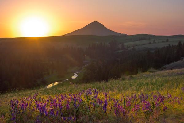 Sunset Over The Palouse River With Purple Vetch -The Palouse, Eastern Washington And Western Idaho