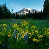Summer Meadow Underneath Mt Rainier - Dead Horse Creek Trail, Mt Rainier NP, WA