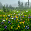 Wildflower Meadows In The Foggy Mist - Mount Rainier National Park, WA