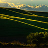 Rolling Shades Of Light On Edges - Hatley Road, Pullman, Palouse, WA