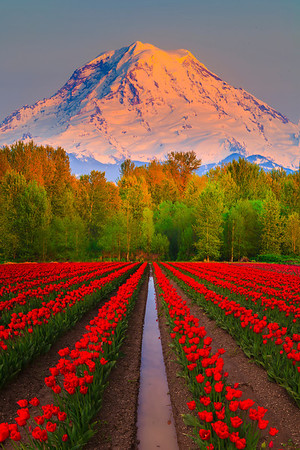 Late Afternoon Light On Mt Rainier - Puyallup, Washington