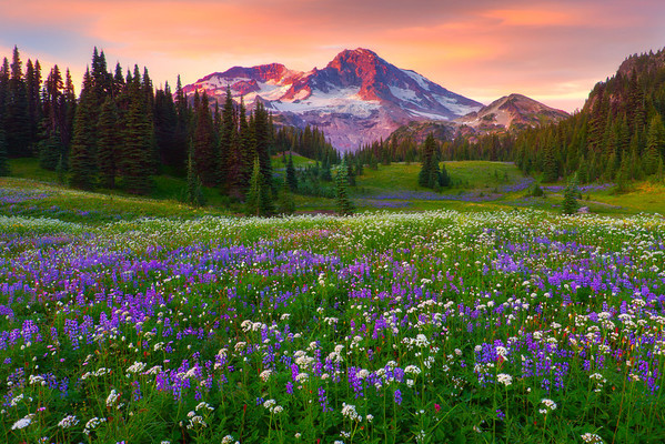 Moments Of Ponder -Indian Henry Hunting Grounds, Mount Rainer National Park, Washington