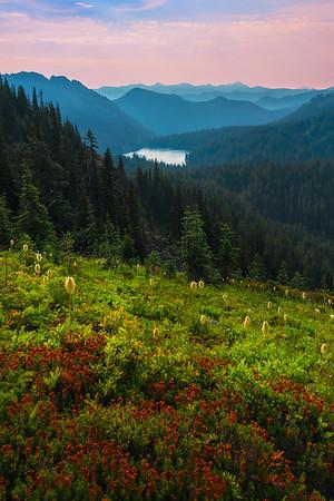 A Glory Of Red Hillside - Naches Peak,  Mount Rainier National Park, Washington St.