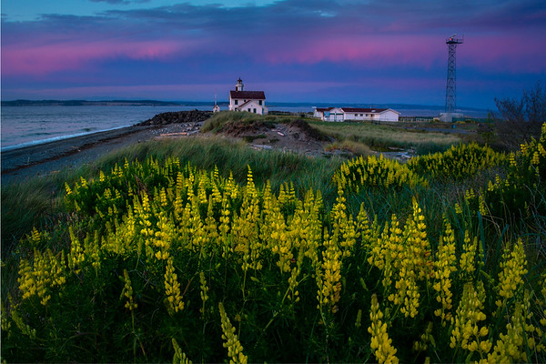 Twilight Color Over Lupine and Point Wilson Lighthouse - Point Wilson Lighthouse, Fort Worden State Park, Port Townsend, WA