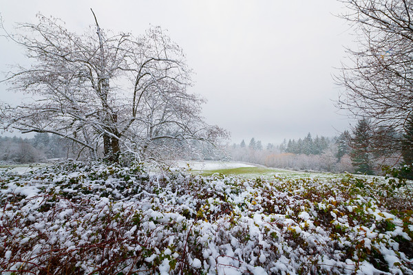 Snow Mix With Autumn - Olympia, WA