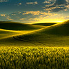Moments Of Magic Golden Light ON Hills Barbee Road, Off Hgy 195, Pullman, Palouse, WA