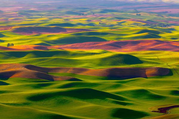 Spring vibrant greens of the Palouse  - Steptoe Butte State Park, Washington