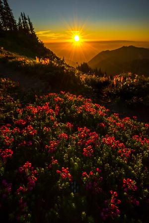 Heather In Last Light On Tolmie Peak
