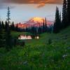 Side Hill Of Purple Asters At Tipsoo Lake - Tipsoo Lake, Mt Rainier NP, WA