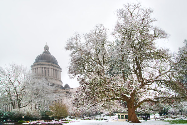 The Capital Building On A Snowy Day - Capital Building, Olympia, WA
