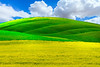 The Perfect Combination Of Colors - The Palouse, Eastern Washington
