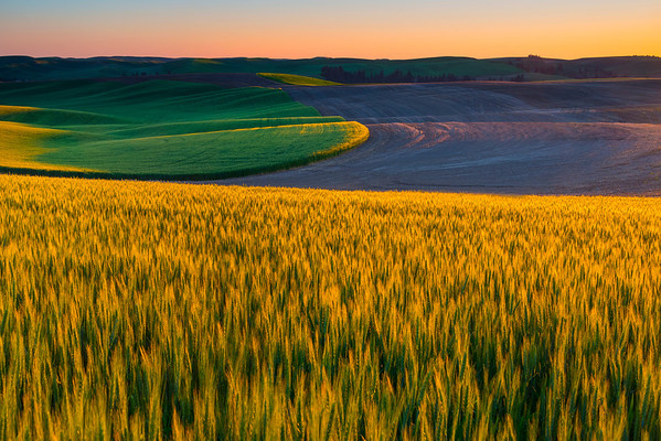The Side Hills Coming Alive - The Palouse, Eastern Washington