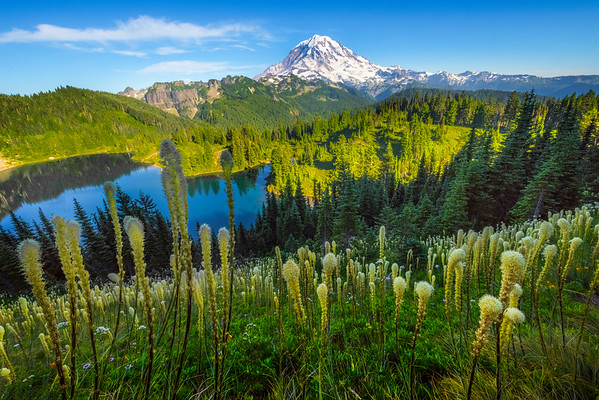 Beargrass And Mt Rainier On Tolmie Peak -Tolmie Peak, Mount Rainier National Park, WA
