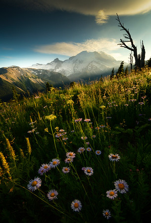 Last Light On Rainier From Silver Forest - Mount Rainier National Park, WA
