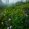 An Arrangement Of Color On The Side Hills - Mount Rainier National Park, WA