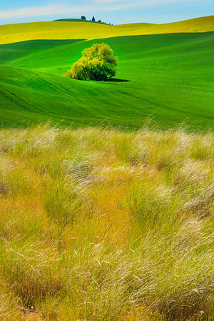 Stunning Pastel Colors Of Spring In The Palouse- The Palouse, Eastern Washington