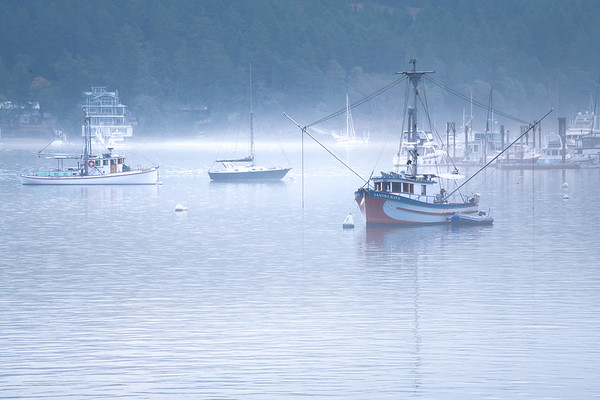 Fog Rolls Into Harbor Bay