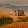 Lost In All The Wheat - Palouse, Eastern Washington