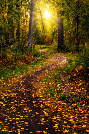 Sun Bursting Through The Methow Forest - Methow Valley, Washington State