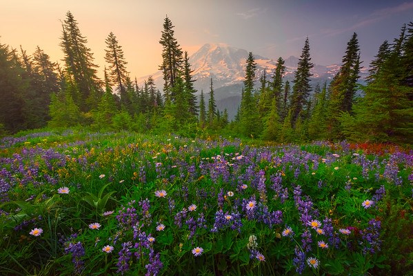 Meadow Arrangement Of All Colors Pinnacle Peak Area, Mount Rainier National Park, WA
