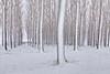 Patterns In Snowy Forest - Othello, Eastern Washington