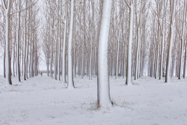 Patterns In Snowy Forest - Othello, Eastern Washington