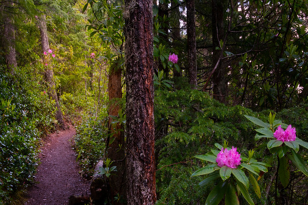Pathway To The Light - Mount Walker Trail, Olympic National Forest, WA