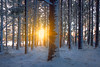 Sunburst Through The Forest