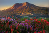 Standing Tall And Proud - Mount St Helens Volcanic Monument,  Washington State