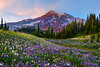 Lupine Fever - Van Trump Park, Mount Rainier National Park, Washington St.