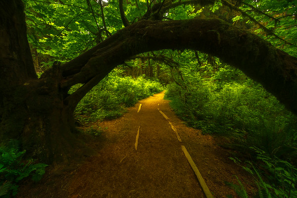 The Gateway Into The Hoh Rainforest